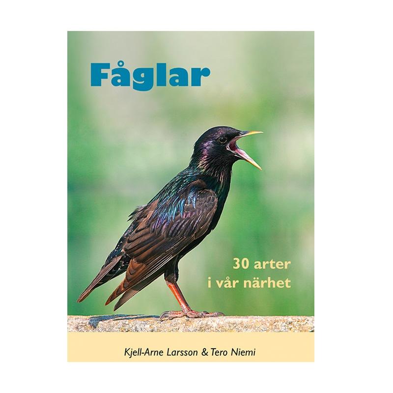 Fåglar - 30 Arter I Vår Närhet